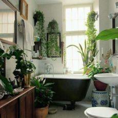 Советы по озеленению ванной комнаты